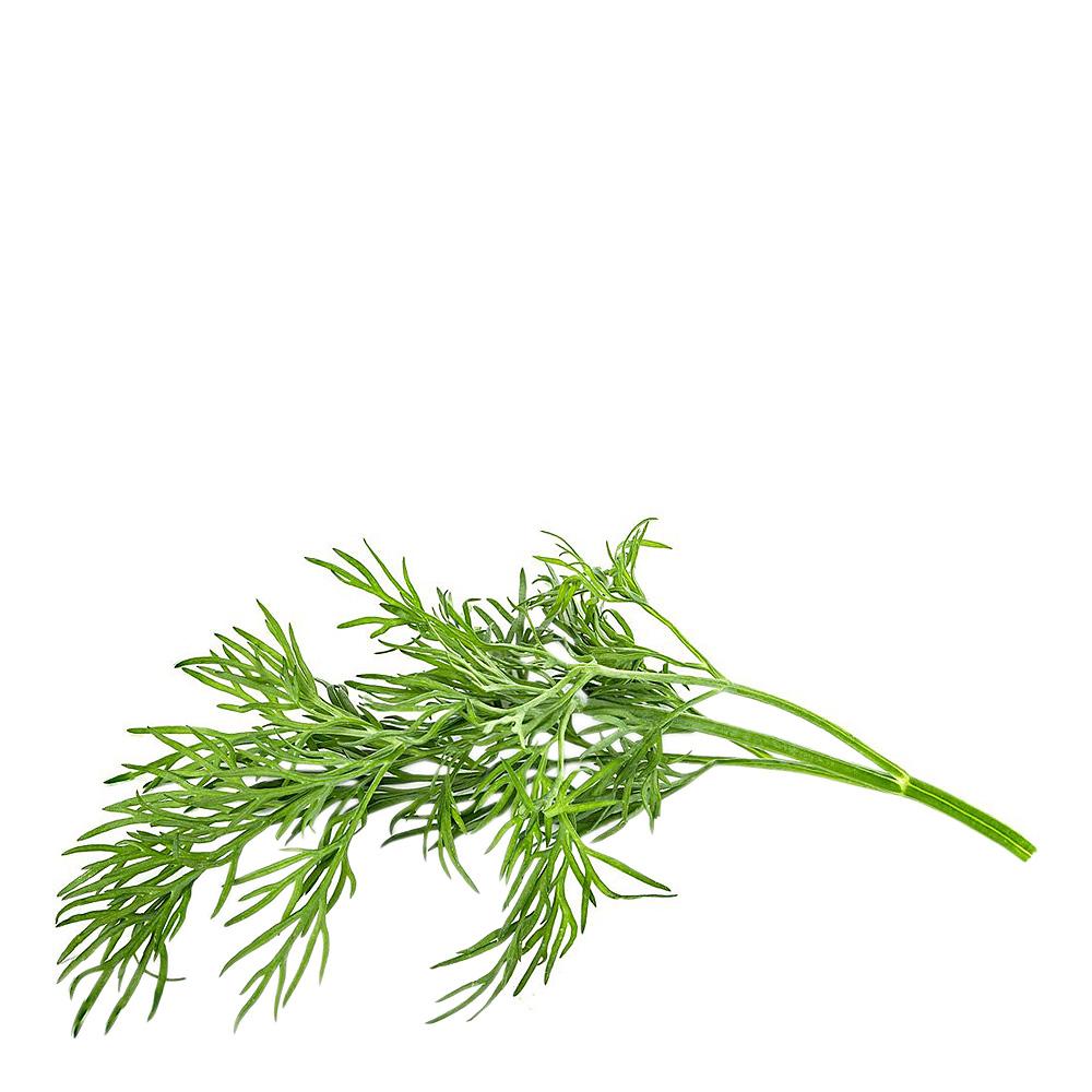 Smart Garden Växtkapsel refill 3-pack Dill