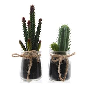 Kollektion Kaktus SORTERAD