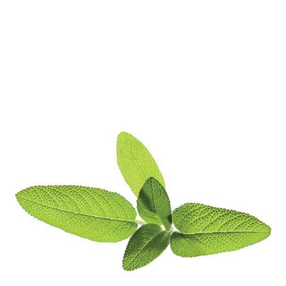 Smart Garden Växtkapsel refill 3-pack Salvia