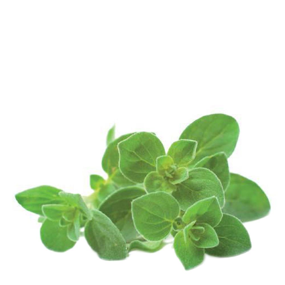 Smart Garden Växtkapsel refill 3-pack Oregano