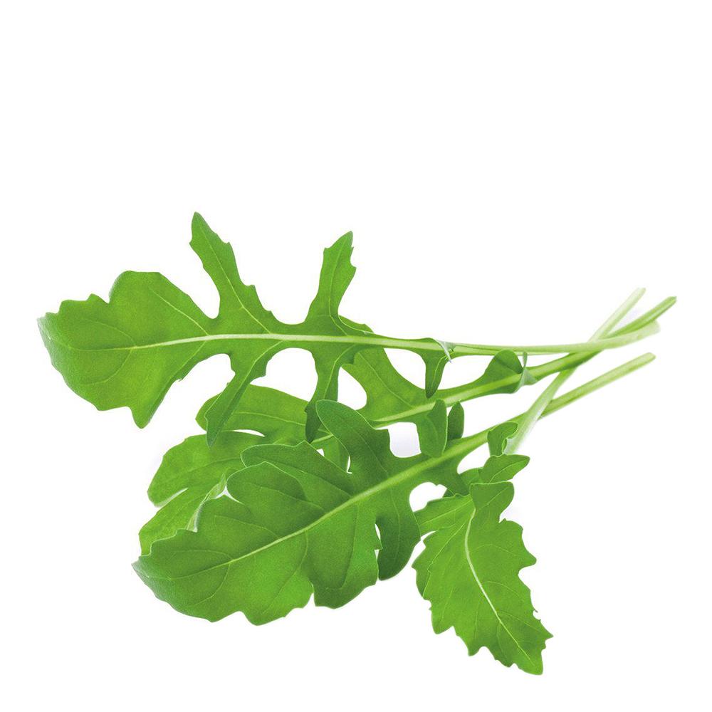 Smart Garden Växtkapsel refill 3-pack Ruccola