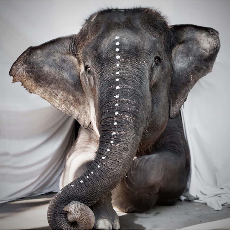 Bilde av Love Warriors-Elephant Adele Poster 50X50