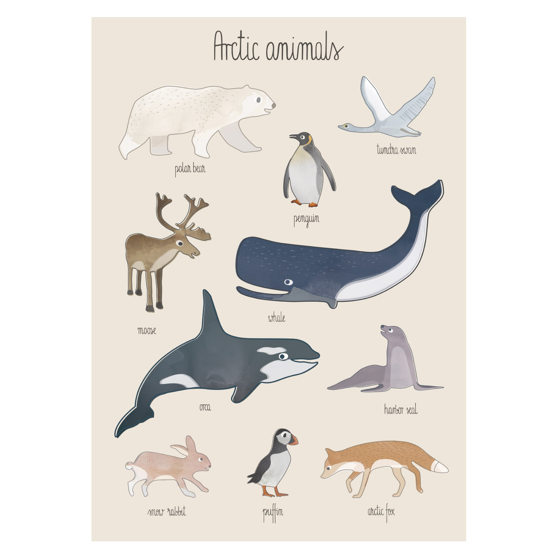 Poster, Arctic Animals