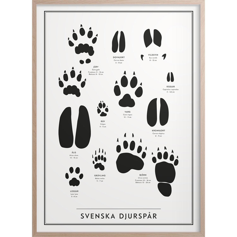 Svenska Djurspår Poster, 50x70 cm