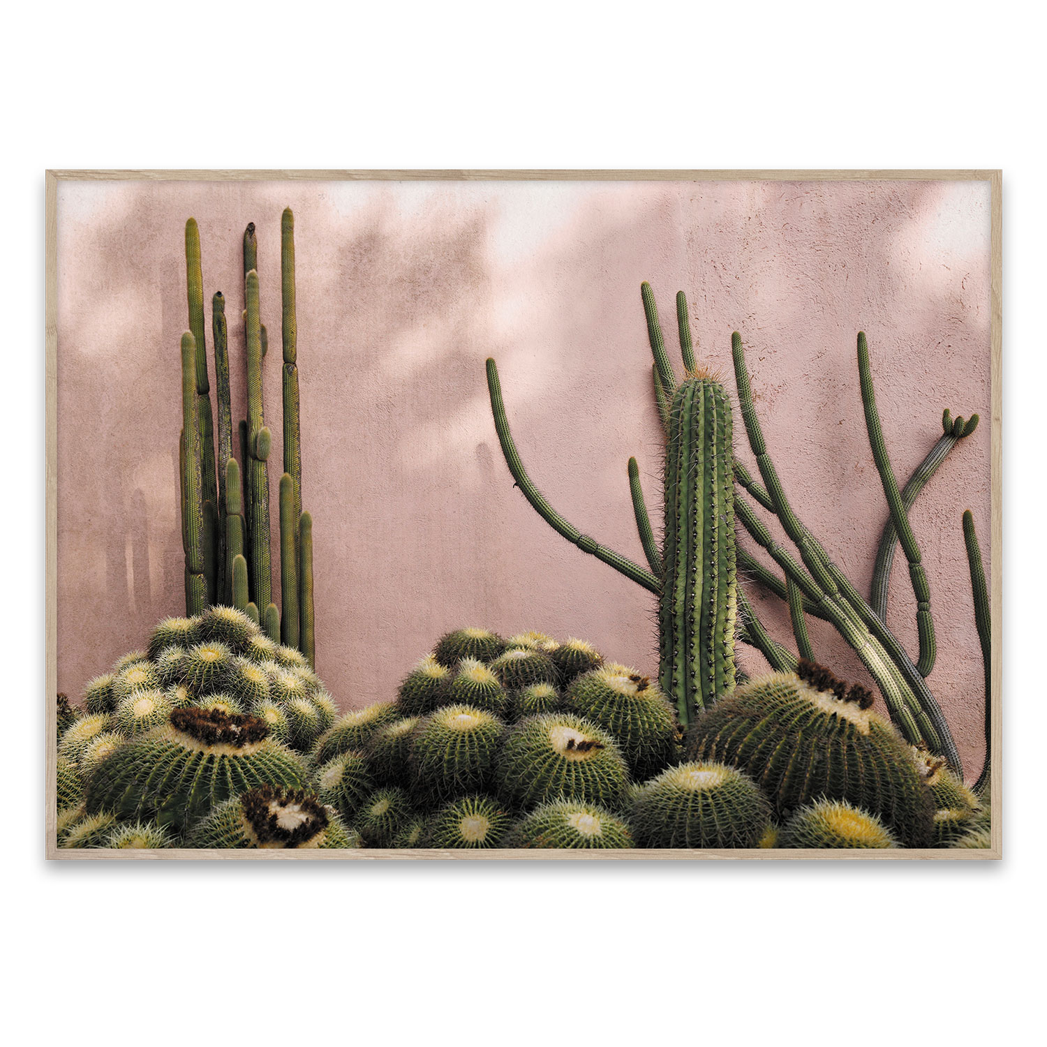 Plants On Pink Poster 50x70
