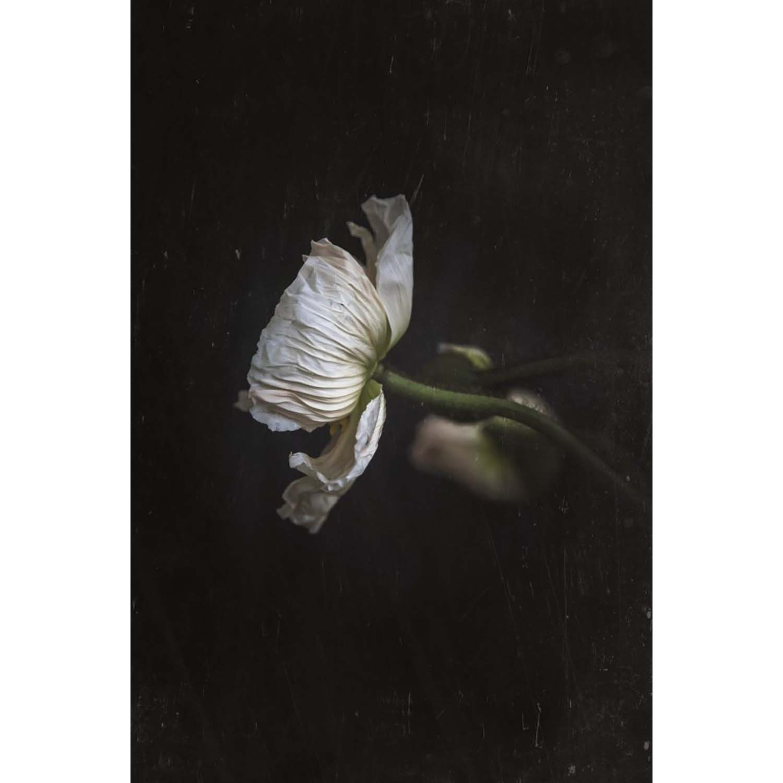 In Dark Stillness - Poppy Bohemian Poster 50X70
