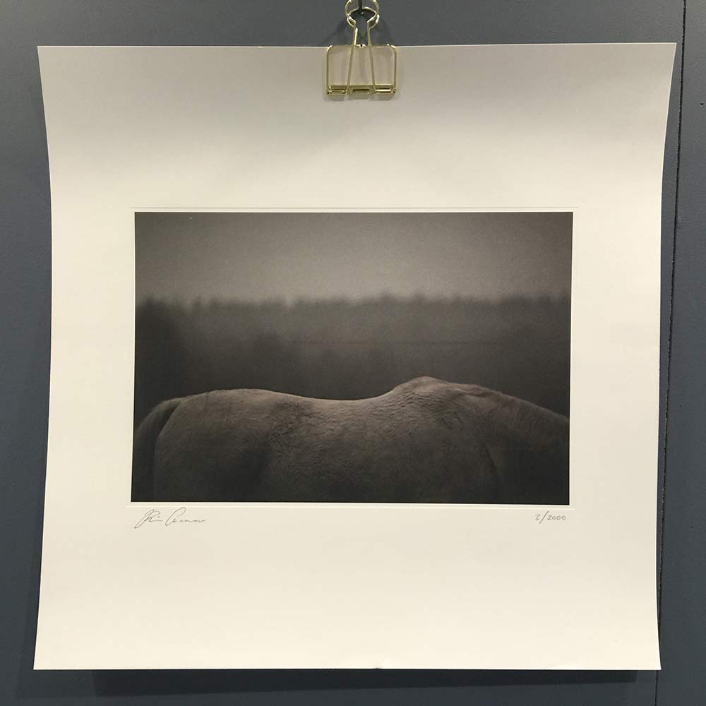 White Horse Poster, 45x45cm