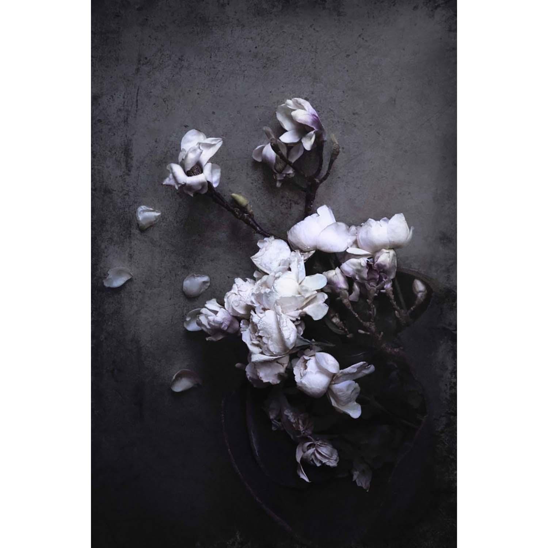Bilde av Love Warriors-Isolde - Magnolia And Roses Poster 30X40