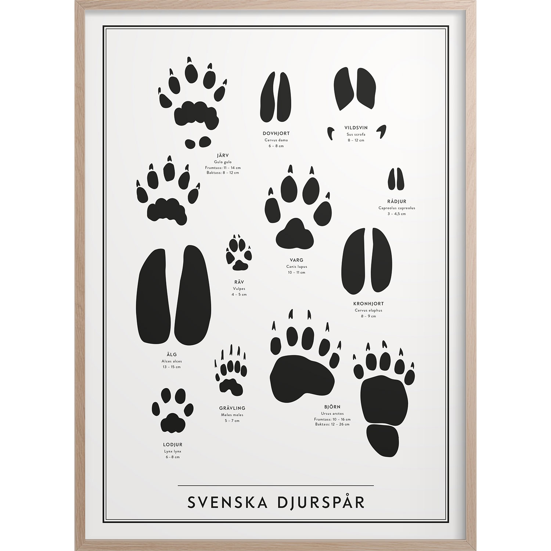 Svenska Djurspår Poster, 30x40 cm
